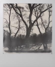 Polaroid_05.jpg