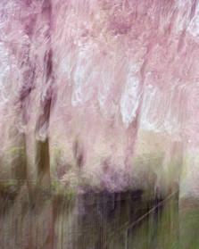 Blossom_#4.jpg