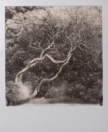 Polaroid_26.jpg