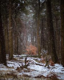 Winterland_37.jpg