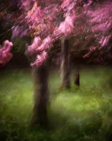 Blossom_#2.jpg