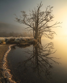 Winterland_33.jpg