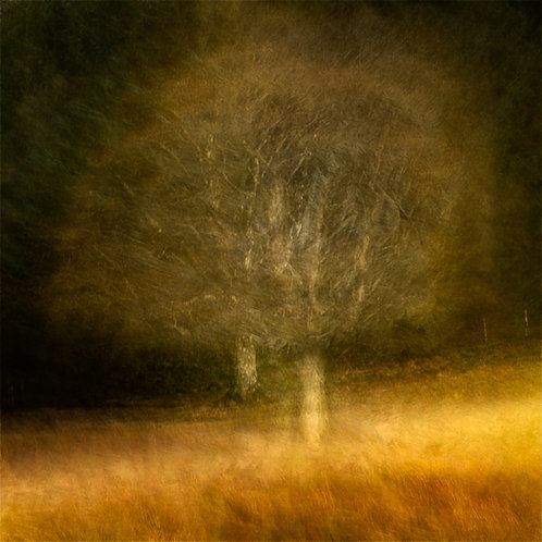 'Doubletree' - on Fotospeed Cotton Etching 305g Signature Paper
