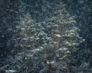 Winterland_26.jpg