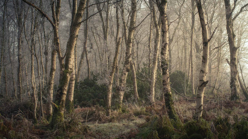 Winterland_29.jpg