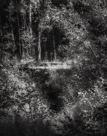 Infrared_21.jpg