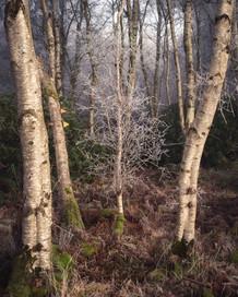 Winterland_28.jpg