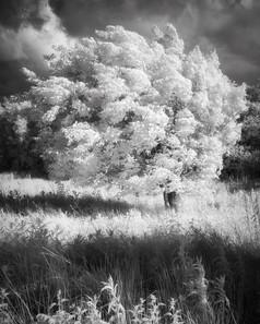 Infrared_15.jpg