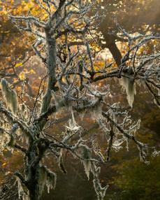 Winterland_32.jpg