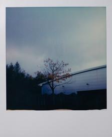 Polaroid_07.jpg