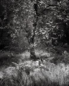Infrared_24.jpg