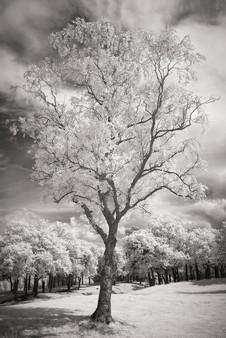 Infrared_33.jpg