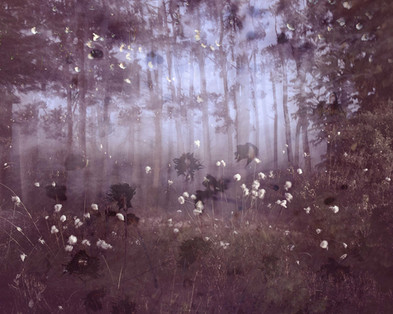 Cotton Grass Abstract