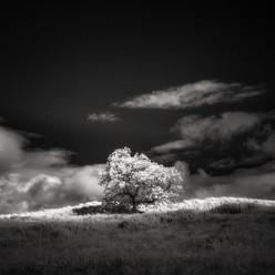 Infrared_19.jpg