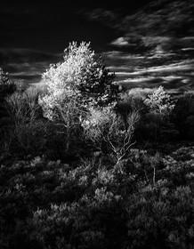 Infrared_01.jpg