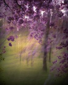 Blossom Abstract #1.jpg