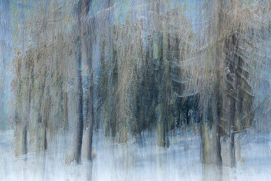 Winter Woodlands #2