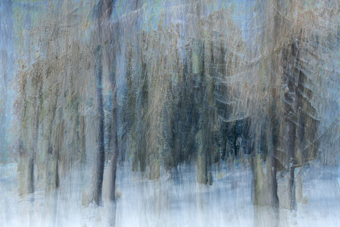 Winter Woodlands #2