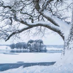Winterland_17.jpg