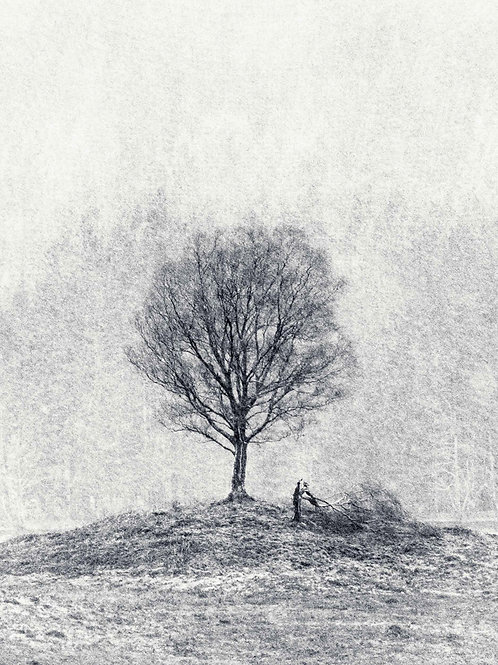 'Winters' Stand' - Printed on Fotospeed Cotton Etching Fine Art Textured Paper