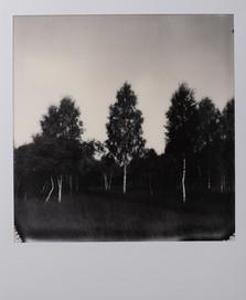 Polaroid_16.jpg