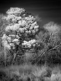 Infrared_02.jpg