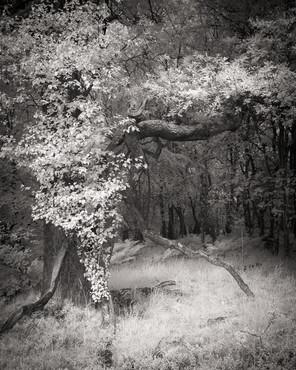 Infrared_29.jpg