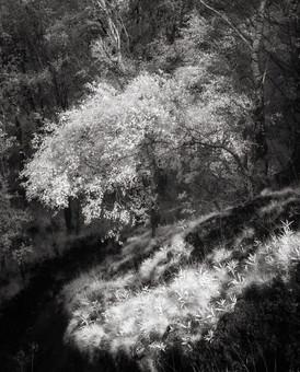 Infrared_17.jpg