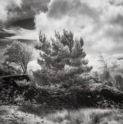 Infrared_16.jpg