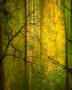 Autumn Glow_#1.jpg