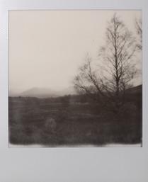 Polaroid_27.jpg