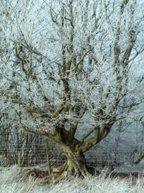 Winterland_24.jpg