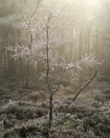 Winterland_31.jpg
