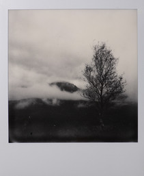 Polaroid_15.jpg