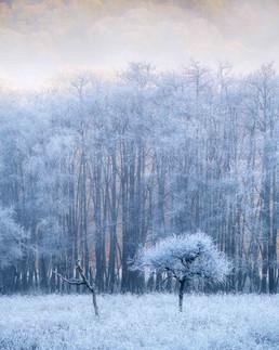 Winterland_20.jpg
