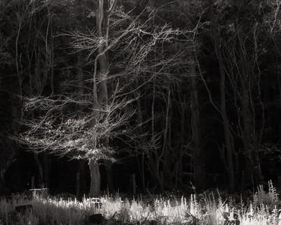 Infrared_27.jpg
