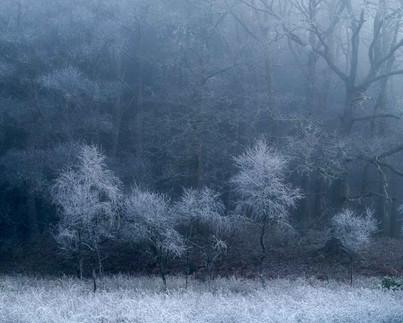 Winterland_13.jpg