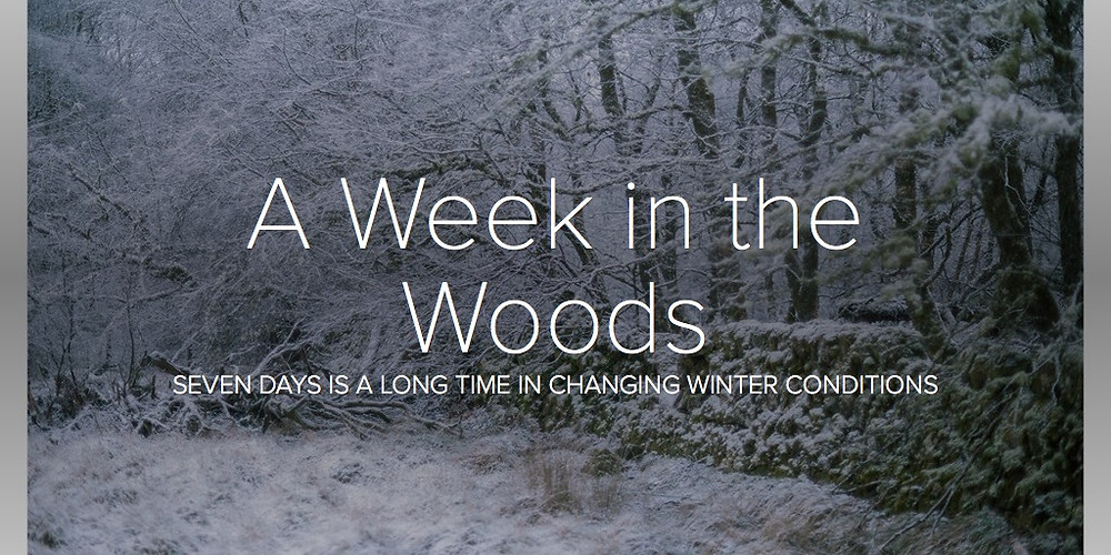 A Week in the Woods