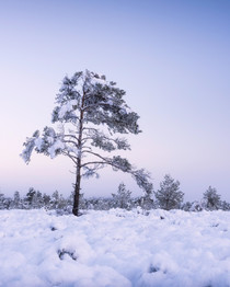 Winterland_10.jpg
