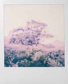 Polaroid_02.jpg