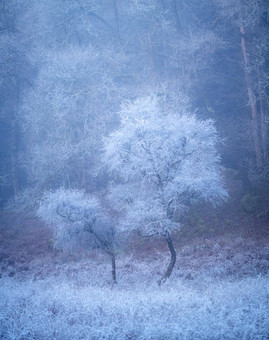 Winterland_12.jpg