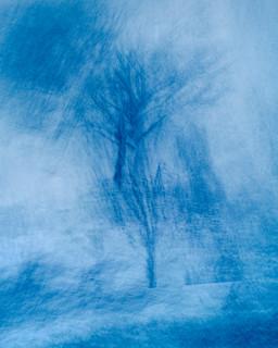Winter Woodlands #3