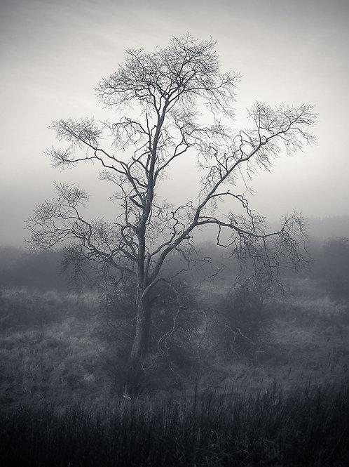 'Sprawling' - on Fotospeed Platinum Baryta Paper 300g Signature Paper