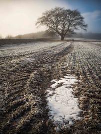 Winterland_21.jpg