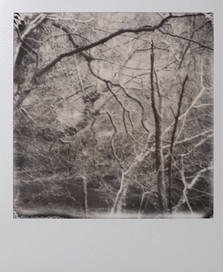 Polaroid_31.jpg
