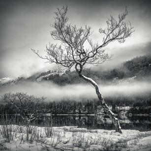 Chon Tree