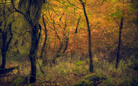 Autumn Glow_#3.jpg