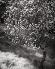 Infrared_13.jpg