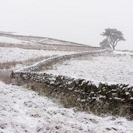 Winterland_40.jpg