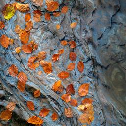 Autumn Speckle